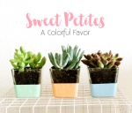 Sweet Petites: Succulent Favors & Gifts